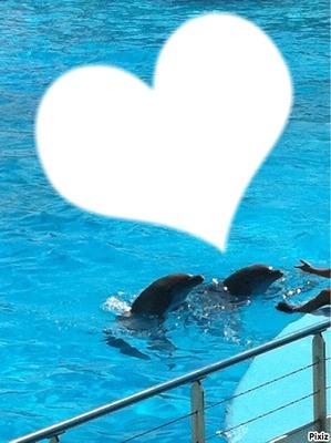i love you les dauphins