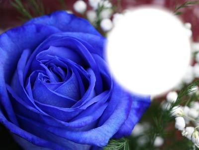 Photo Montage Rose Bleue Fleur Nature Pixiz