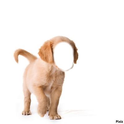 chien tête humain