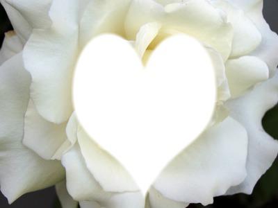Montaje fotografico una rosa blanca - Pixiz