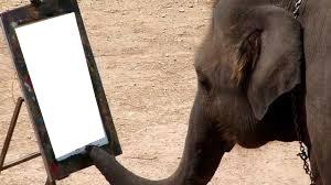 inde elephant