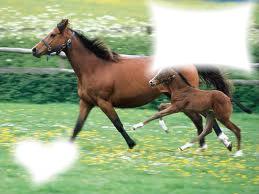 i love you cheval
