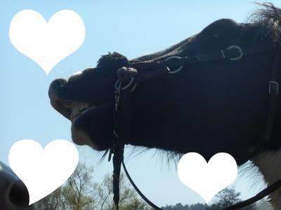 Kochać Konie