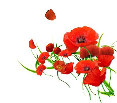 3 photos fleurs rouges