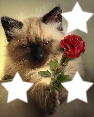 le chat avec une rose 3 cadres photos