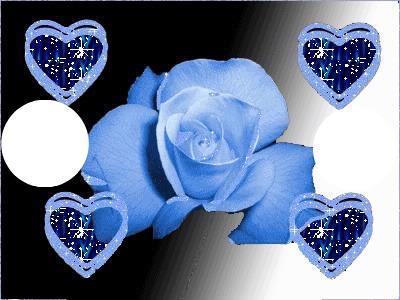 rose bleu coeur