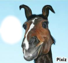 cheval marrant