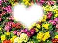 Fleurs de coeurs