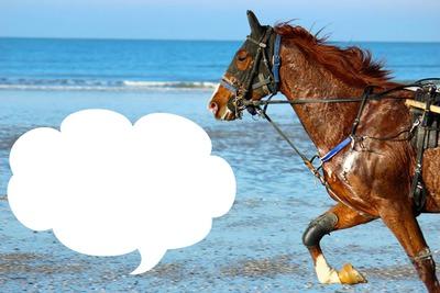 les chevaux a la plage de deauville