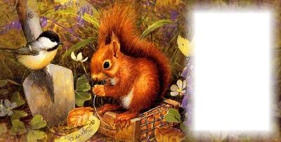ecureuil automne