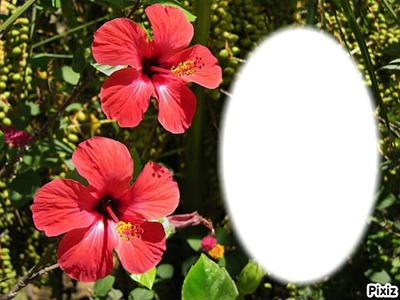 ***hibiscus***