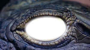 l'oeil du crocodile a lise