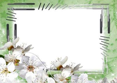 Cadre vert-fleurs blanches