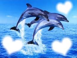 cadre dauphins 3 vissage