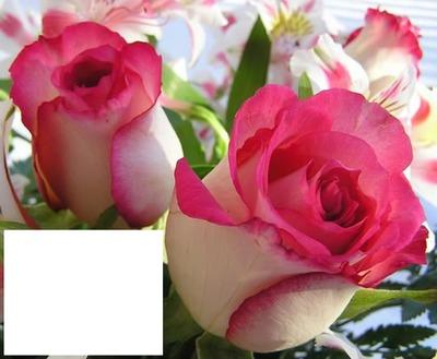 rosas para mi amiga