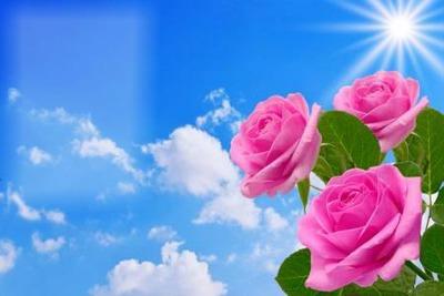 rosa Madre