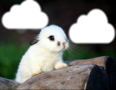 lapin nuage