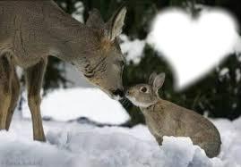 bambi lapin