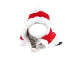 chat et visage Noël