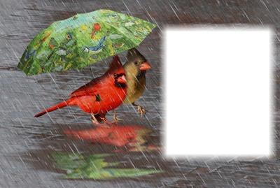 Journée de pluie