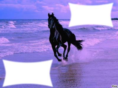 Cheval sur la mer