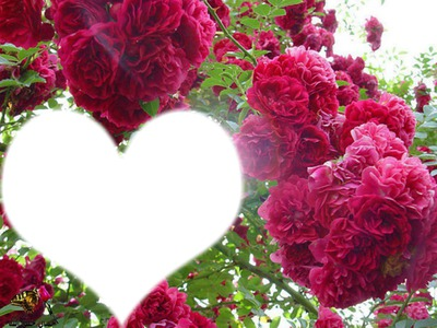 fleurs et coeurs