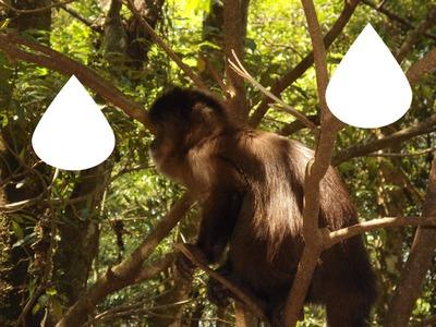 macaco 2 foto