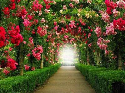 photo montage jardin de rosas tunel pixiz