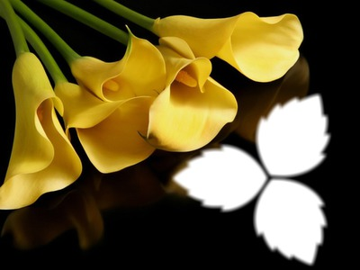 Flowers/*