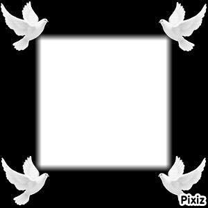 oiseau cadre