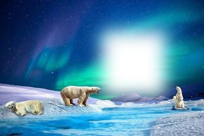 sarkifény jegesmedve