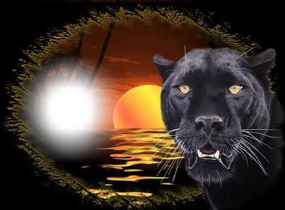 Ma Panthère Noire