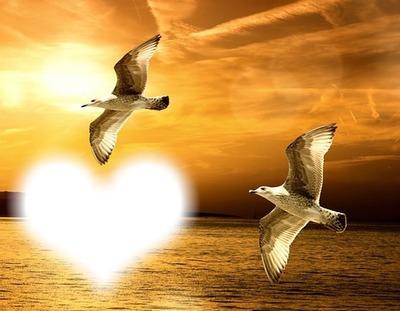 Oiseaux en vol-coucher de soleil