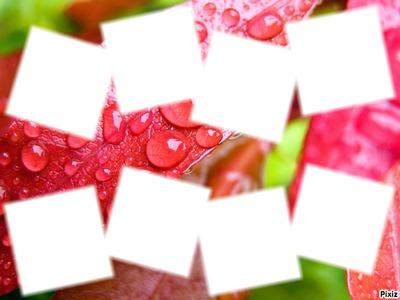 Gouttes d'eau sur feuilles rouges