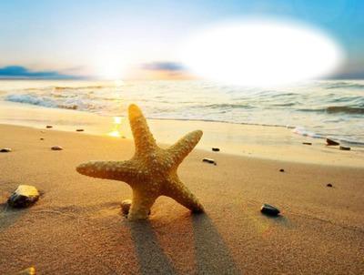 Coucher de soleil-étoile de mer-plage