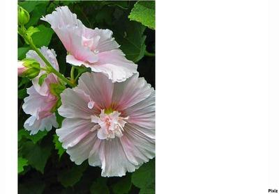 frame flower (full)