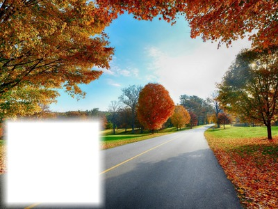 Chemin - route - automne