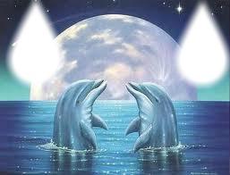 goute dauphin