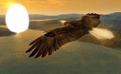 Old eagle-Qoca qartal