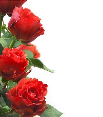 Rosas- 4 Fotos