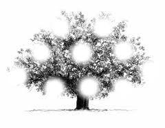 Un arbre pour la famille