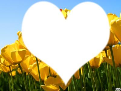 tulipe d'amour