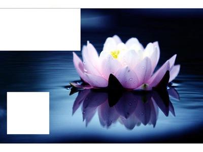 Fotomontage Fleur De Lotus Pixiz