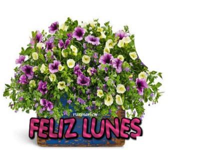 Fotomontage Lindas Flores Para Ti Pixiz