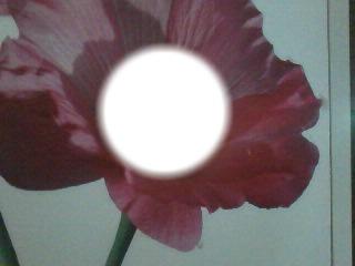 un fleure parmi les fleur
