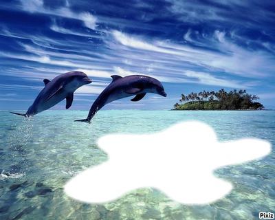 double dauphins