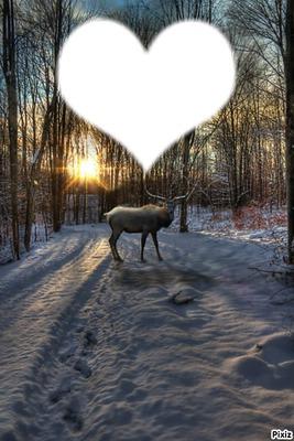 coeur d'hiver
