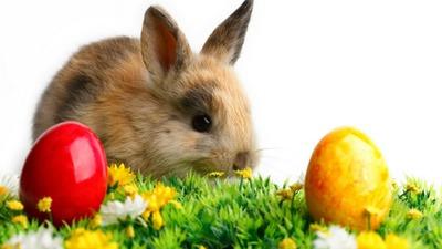 Easter Rabitt
