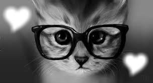 mon chaton d'amour