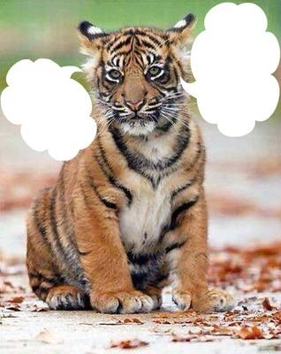 tigre 2 photos cadre